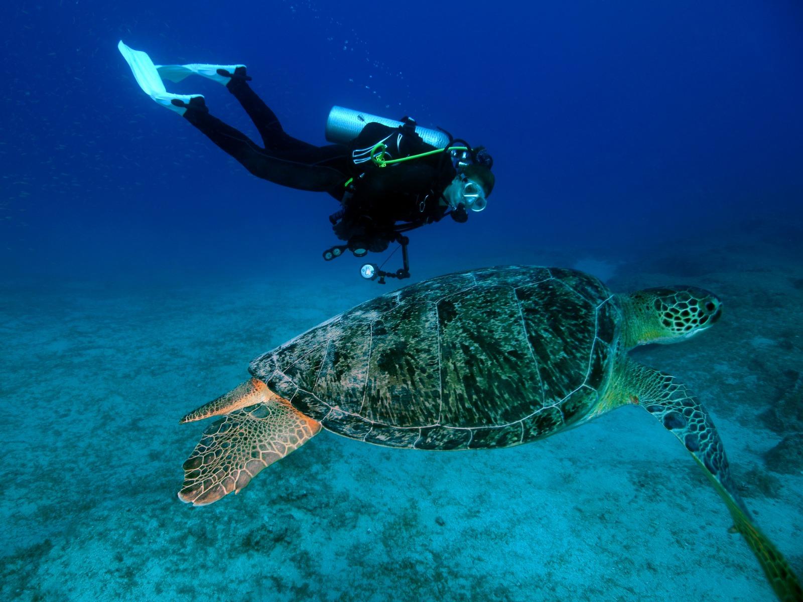 ダイビングツアーが魅力の海外スポット10選|海の大自然を満喫しよう