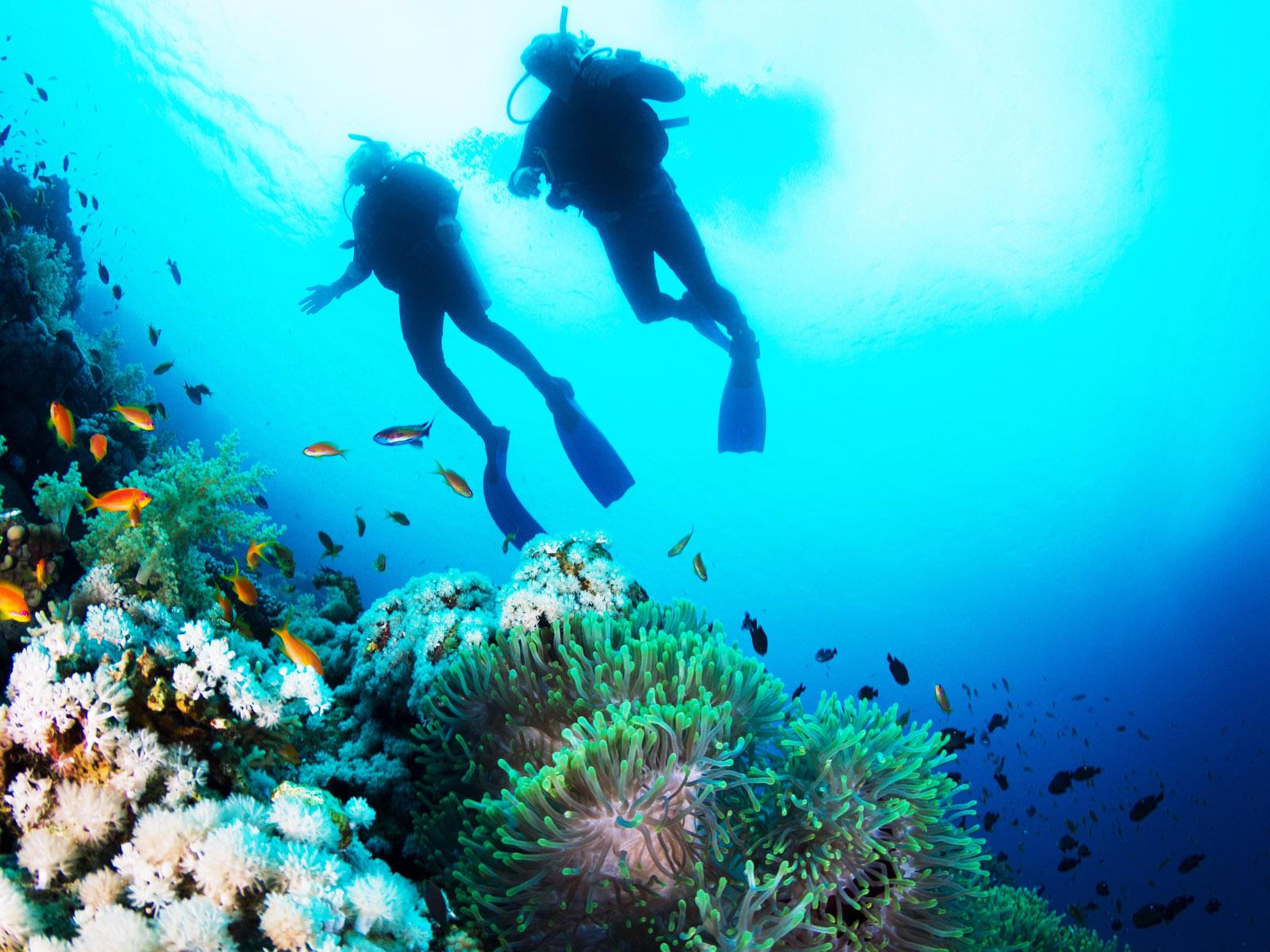 死ぬまでに泳ぎたい絶景ダイビングスポット!国内から海外までおすすめ42選
