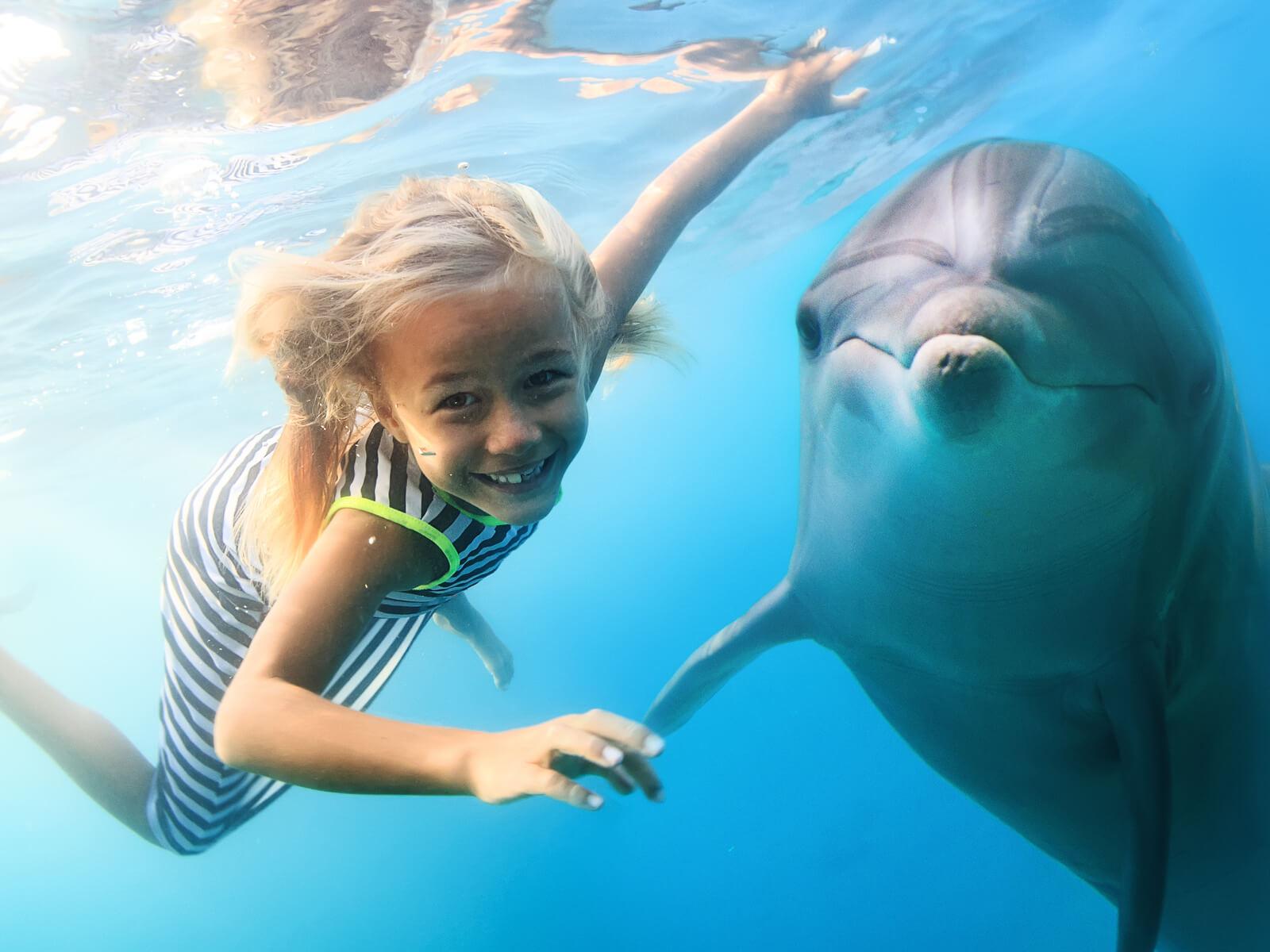 ドルフィンスイムを楽しめる海外スポット6選|野生のイルカと泳ぐアクティビティツアー