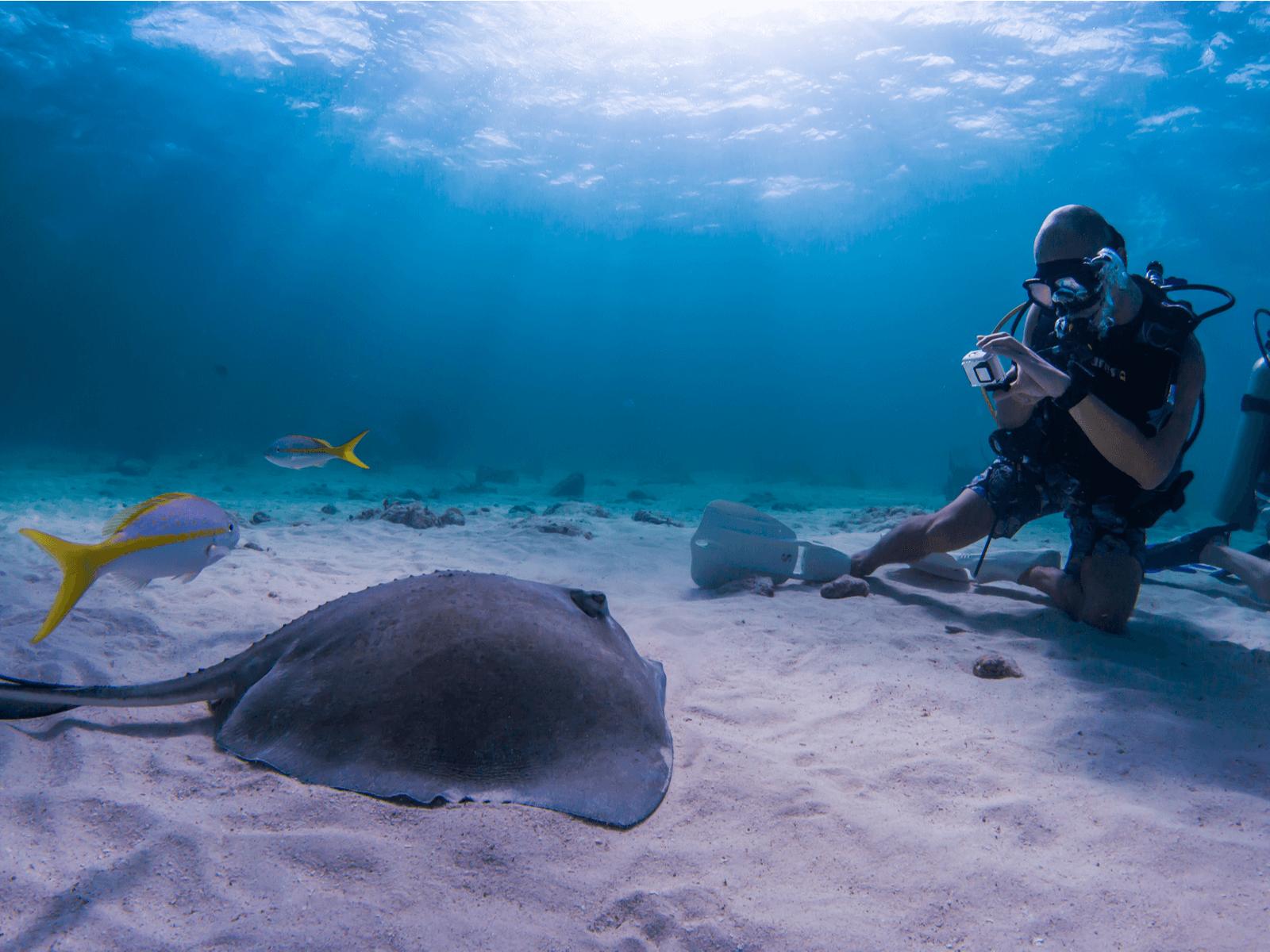 ダイビングにおすすめな水中カメラ7選!初心者が知っておきたい選び方と基礎知識